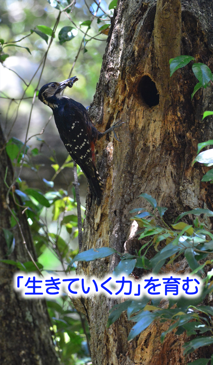 tokunoshima 04 top - (4)助産院ばぶばぶ 移転します!