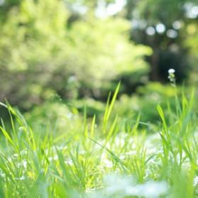 雑草パワーを見習おう!