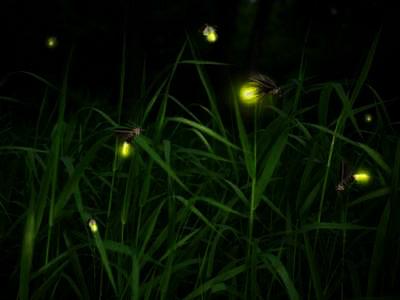 hotaru 1 - ホタルの光