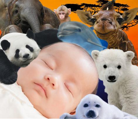 honyu rui 471x405 - 哺乳類の母乳