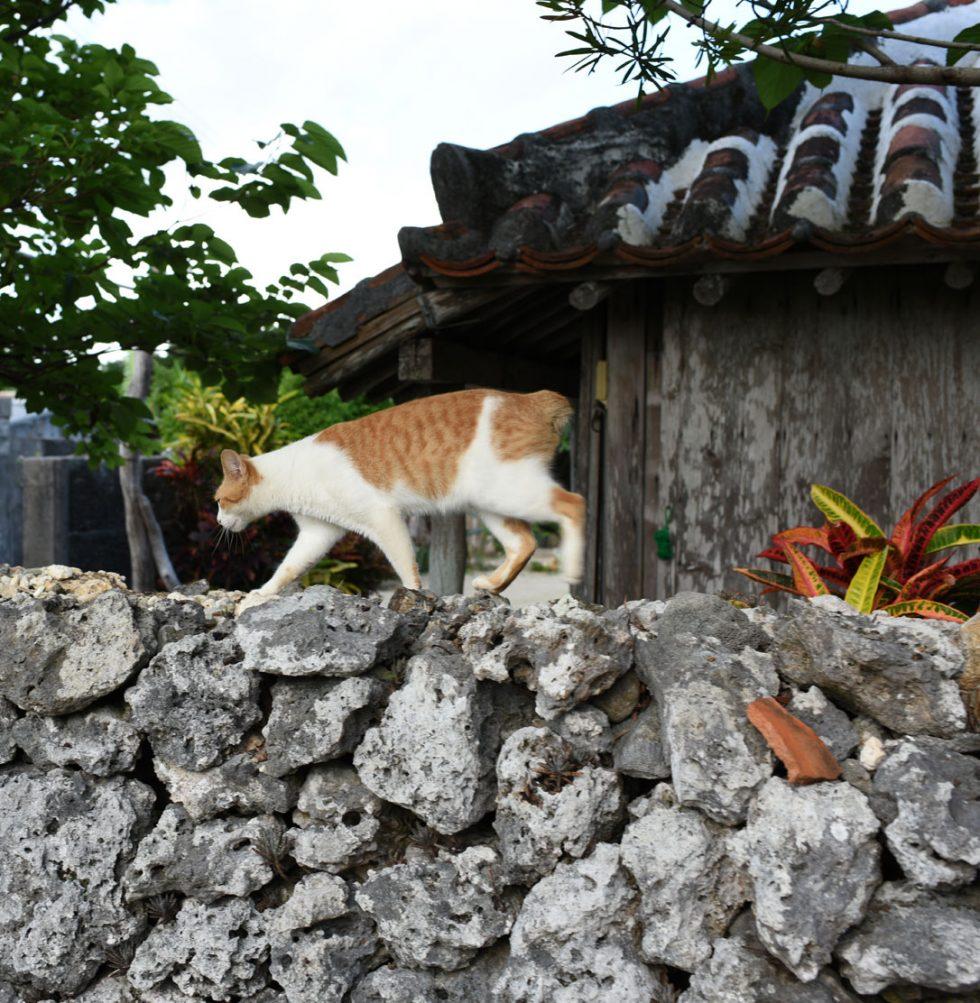 neko - カラスはいなくてネコがいる!